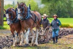 Dwa kobiety prowadzą pług ciągnącego szkiców koniami zdjęcia royalty free