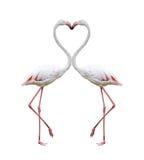 Dwa kolorowego flaminga Obrazy Stock