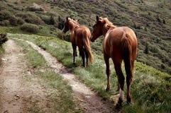Dwa konia blisko drogi zdjęcia stock