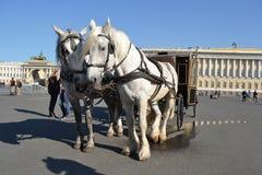 Dwa konia i fracht Zdjęcie Royalty Free