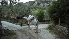 Dwa konia odpoczywają po tym jak ładunek wycieczki Biedny życie ludzie żyje w górach Transport zwierzęta i ładunki zbiory