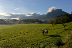 Dwa konia po środku łąki Zdjęcie Royalty Free