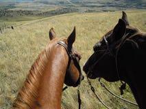 Dwa konia przygotowywającego jechać Obrazy Stock