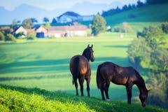 Dwa konia w łące i górach. Obraz Royalty Free