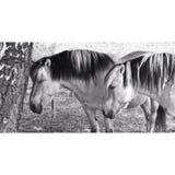 Dwa konia w czarny i biały podczas lata ilustracji