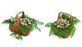 Dwa kosza z przepiórek jajkami odizolowywającymi na białym tle zdjęcia stock