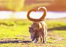 Dwa kotów piękny młody spacer w Pogodnej łące na jasnym wiosna dniu podnosi ich opakowanie i ogony w formie a one obrazy stock