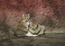 Dwa kota śmieszny przybłąkany lying on the beach w słońcu Obraz Royalty Free