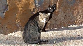 Dwa kota blisko ściany obrazy stock