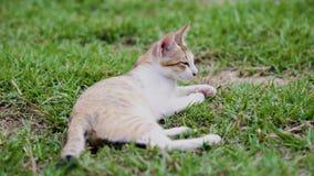Dwa kota dokuczaj? each inny zbiory