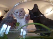 Dwa kota i rybiego zbiornik fotografia stock