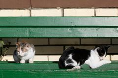 Dwa kota kłaść na zielonej ławce w ranku Obrazy Stock