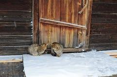 Dwa kota siedzą na drewnianym ganeczku Obraz Royalty Free