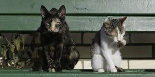 Dwa kota siedzi na zielonej ławce Fotografia Royalty Free