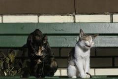 Dwa kota siedzi na zielonej ławce i ziewaniu Zdjęcia Royalty Free