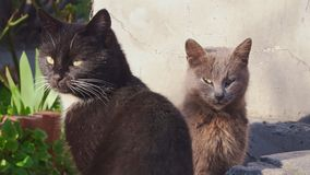 Dwa kota wygrzewają się w słońcu zbiory