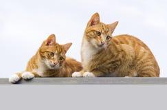 dwa koty zdjęcia stock
