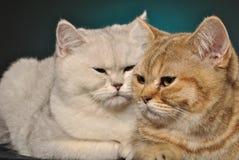 dwa koty Obrazy Stock