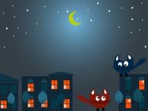 Dwa kota przy nocą Obraz Stock