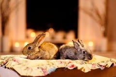 Dwa królik grabą obraz royalty free