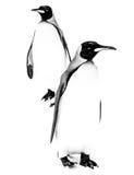 Dwa królewiątko pingwinu w Black&White Zdjęcia Stock
