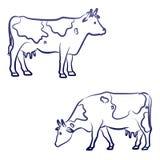 Dwa krowy Obraz Royalty Free