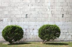 Dwa krzaka przed kamienną ścianą Zdjęcie Stock