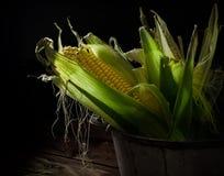 Dwa kukurydzanego cobs w niecce na drewnianym tle przed ciemnym tłem Obraz Stock