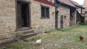 Dwa kurczaka szukają przy ziemią starymi domami fotografia stock