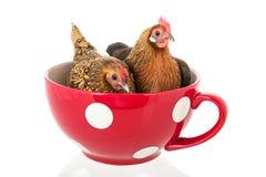 Dwa kurczaka w dużym zupnym pucharze Obraz Royalty Free