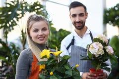 Dwa kwiaciarnia Trzyma Domowego kwiatu garnka portret zdjęcia stock