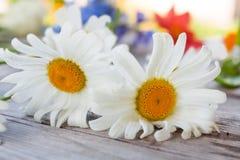 Dwa kwiatu rumianek na starym drewnianym stole Obrazy Stock