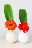 Dwa kwiatu w dzbanku Zdjęcia Royalty Free