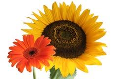 dwa kwiaty Fotografia Stock