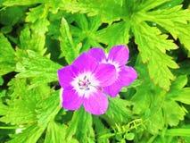dwa kwiaty Zdjęcie Stock