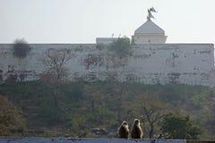 Dwa Langur przy Shri Nathji świątynią Fotografia Stock