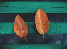 Dwa liścia na ławce obraz stock