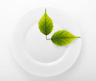 Dwa liścia w ceramicznym naczyniu odizolowywającym na bielu Obrazy Stock