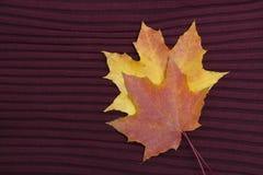 Dwa liścia klonowego na Burgundy trykotowym tle Jesieni concep Fotografia Stock