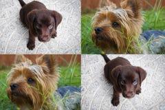 Dwa ślicznego szczeniaka psa Zdjęcia Royalty Free