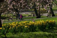 Dwa ludzie cieszy się przespacerowanie przez parka w wiośnie fotografia royalty free