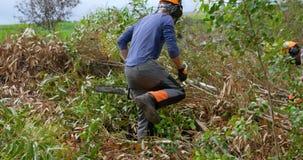 Dwa lumberjacks pracuje w lesie 4k zbiory wideo