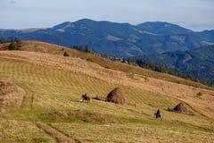 Dwa mężczyzna pozbywa się konie na dolinie na halnym tle Obrazy Stock