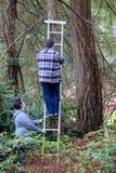Dwa mężczyzna trzymają drabinę i wspinają się bezpiecznie w lesie obraz stock