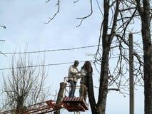 Dwa mężczyzny żyłuje wysokich drzewa z piłą łańcuchową od powietrznego przyrządu Odmładzanie starzy drzewa wśród ele zdjęcie royalty free