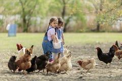 Dwa mała dziewczynka żywieniowego kurczaka Zdjęcie Royalty Free