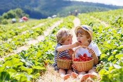 Dwa małej rodzeństwo chłopiec na truskawce uprawiają ziemię w lecie Obrazy Stock