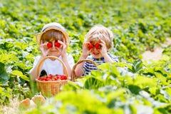 Dwa małej rodzeństwo chłopiec na truskawce uprawiają ziemię w lecie obraz royalty free