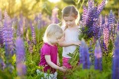 Dwa małej siostry w kwitnącym lupine polu Zdjęcie Royalty Free