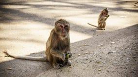 Dwa małpy jedzą owoc na ulicie Obrazy Stock